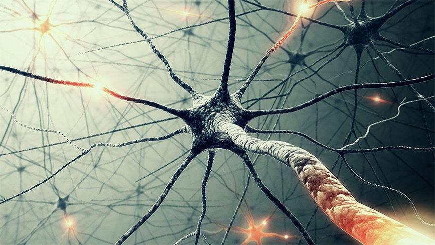 Как образуются нейронные сети и где применяются