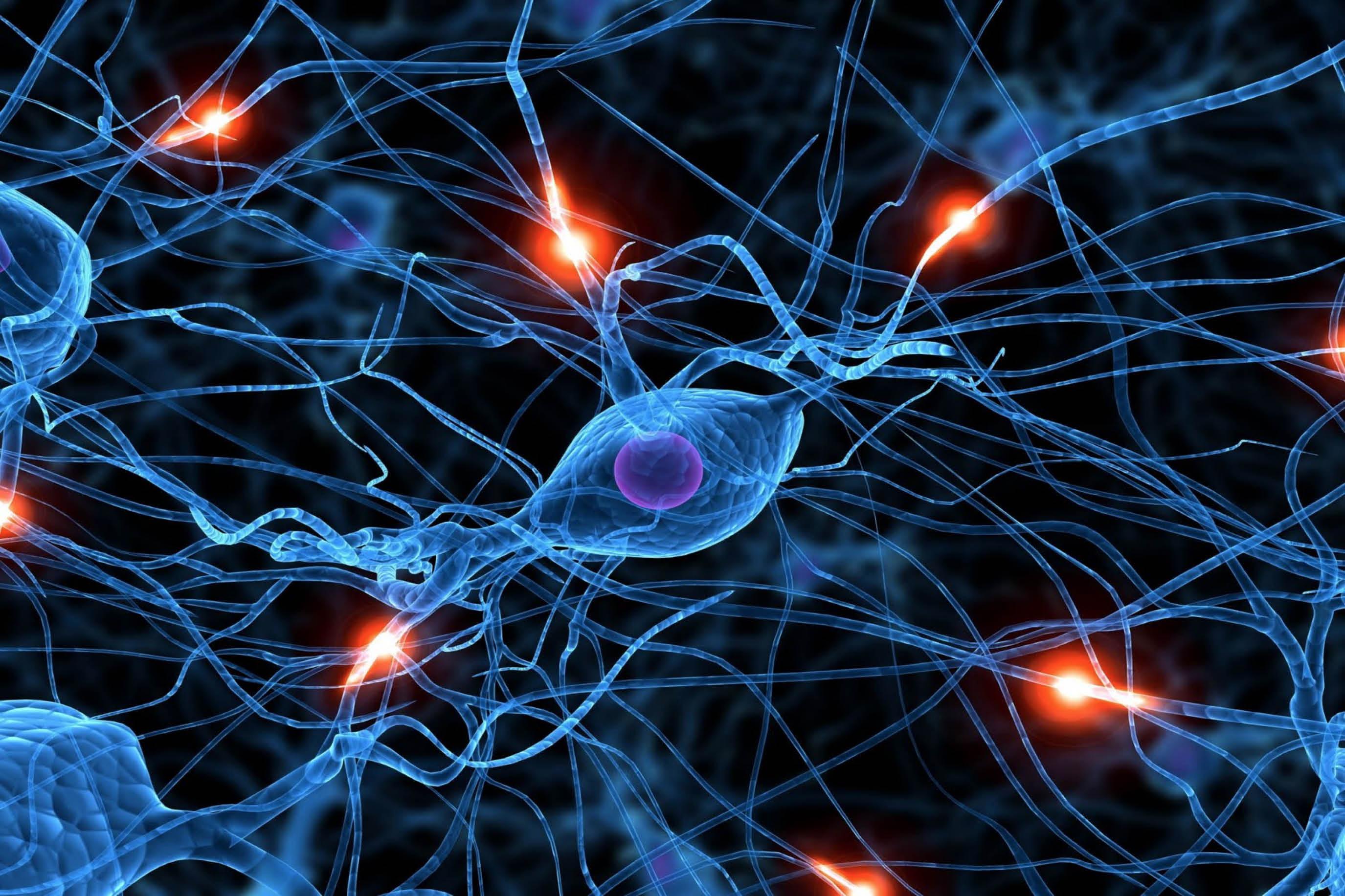 Что такое нейронные сети, их связь с мозгом