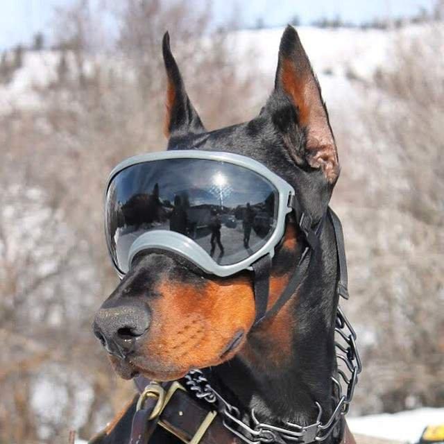 Очки для собак, которые изобрели супруги из США