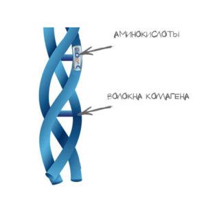 Строение дермы: коллаген, процессы старения, как появляются морщинки