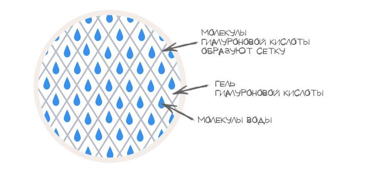 Строение гилуароновой кислоты напоминает соты. Молекулы –это сеть из ячеек, внутри которых находиться вода, как живительна сила для молодости кожи и ее упругости