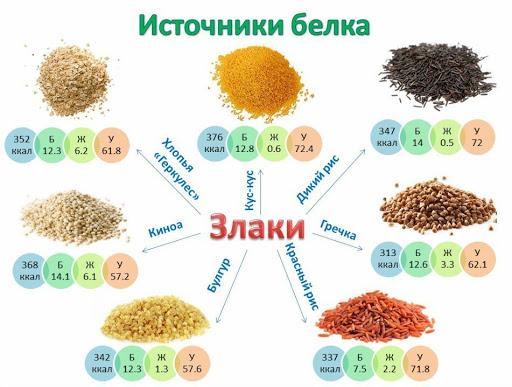 Злаки - источники белка