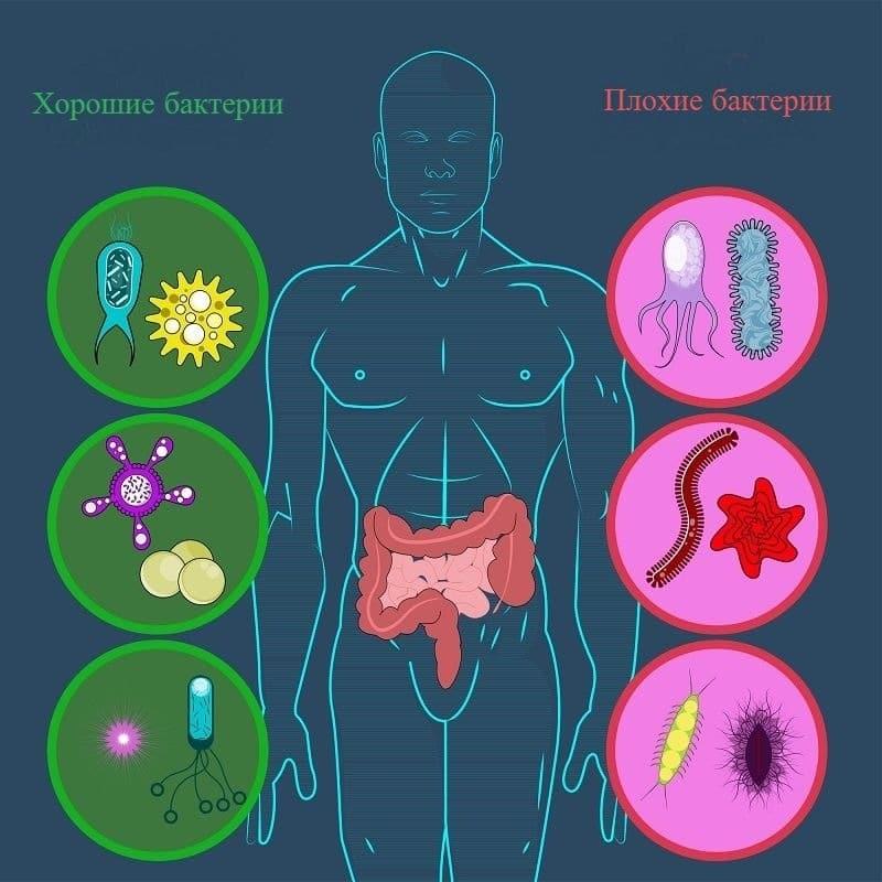 Микробиота кишечника - хорошие и плохие бактерии