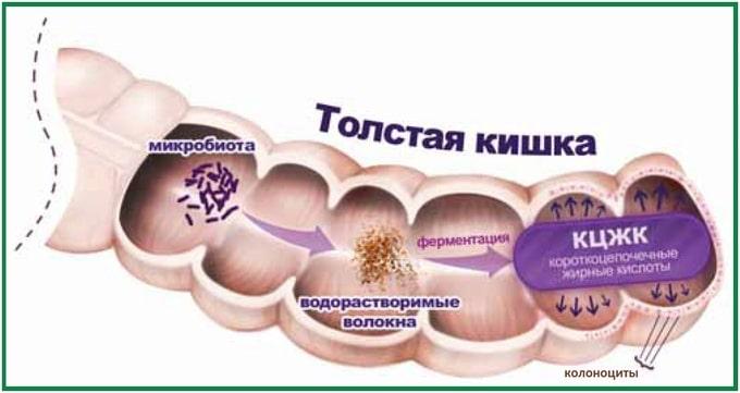 Короткоцепочечные жирные кислоты