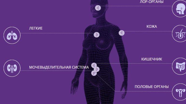 Где расположена микробиота человека