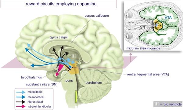 Система вознаграждения мозга