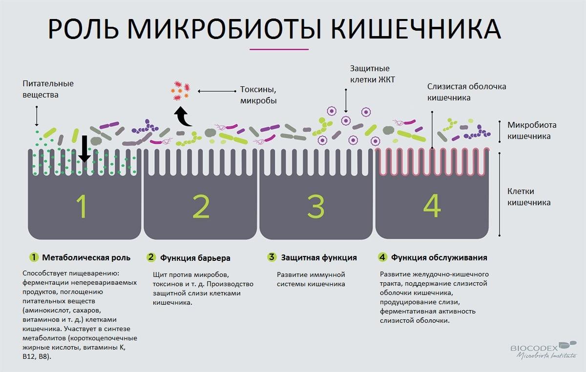 Роль микробиоты человека.