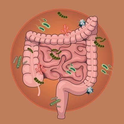 Как кишечные бактерии могут лечить рак