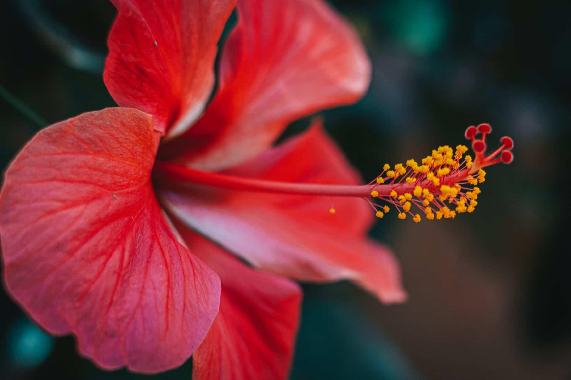 Цветение - увеличение количества пыльцы от цветков и развития проблем с дыханием
