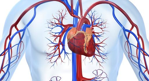 Все о болезнях сердца