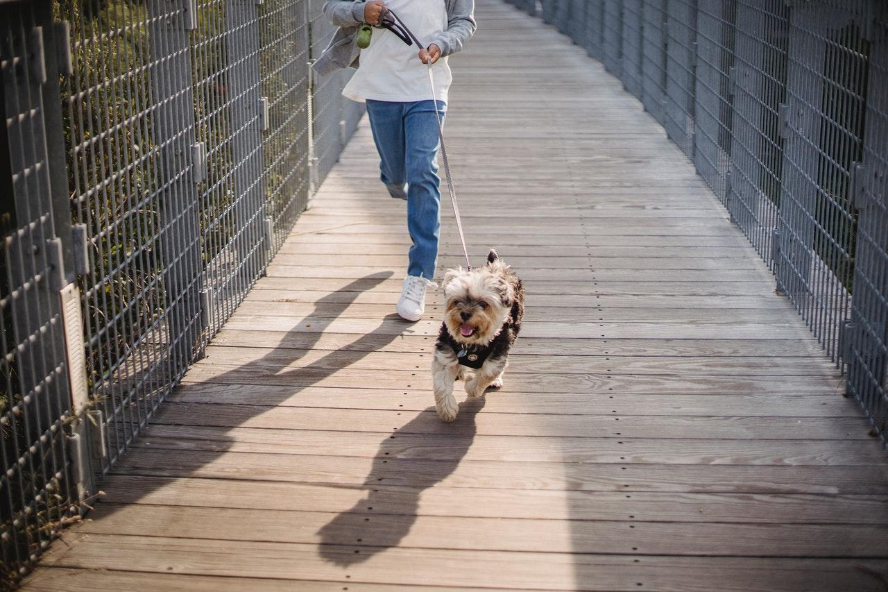 Двигаться полезно. Почемустоит много ходить и бегать?